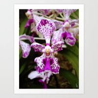 Wild Orchid (Pink & White) Art Print