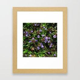 glechoma hederacea Framed Art Print