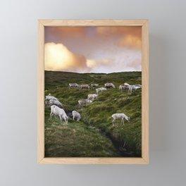 Reindeers in midnight sun Framed Mini Art Print