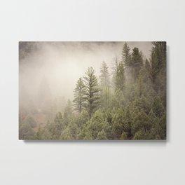 Color Landscape | Pine Forest in Fog Metal Print