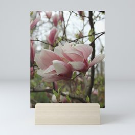 Pink magnolia flower on the branch against the sky in spring Mini Art Print