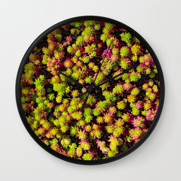 Pink and Green Succulents Wall Clock
