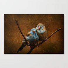 Male and Female Cordon Bleu Canaries Canvas Print