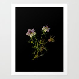 Nigella Hispanica Mary Delany Delicate Paper Flower Collage Black Background Floral Botanical Art Print