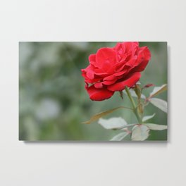 Red Forever Metal Print
