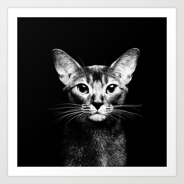 Abyssinian Cat Black