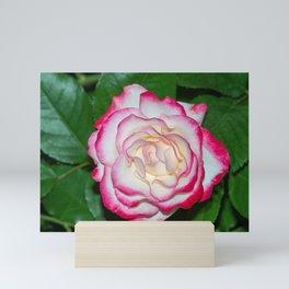 Cherry Parfait Rose Mini Art Print