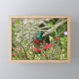 Honey Bird Framed Mini Art Print