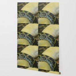 Boas Crossing Wallpaper