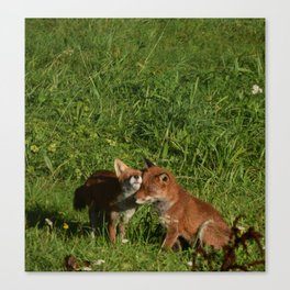 Mr & Mrs Fox Canvas Print