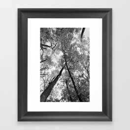 Looking Up in Black and White Framed Art Print