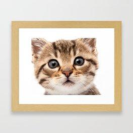 Just a Cat Framed Art Print
