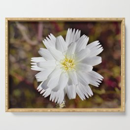 White Petals in the Desert by Reay of Light Photography Serving Tray