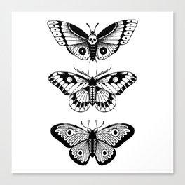 Moths Canvas Print