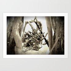 Driftwood (B&W) Art Print