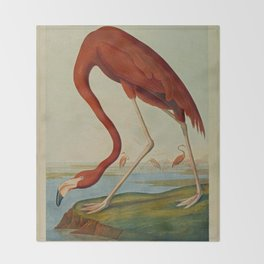 American Flamingo by John Audubon (1785 – 1851) Reproduction. Throw Blanket