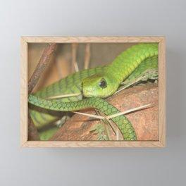 Green viper Framed Mini Art Print