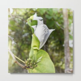 Delicate butterfly tree flower Metal Print