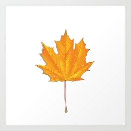 Orange maple leaf Art Print