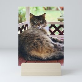 Green Eyes & Fluff (Lanai Cat Sanctuary) Mini Art Print
