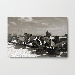 Fine Beach Vine  Metal Print