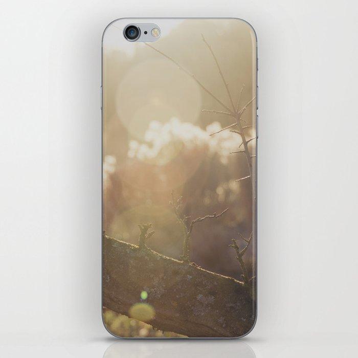 garden sunburst... iPhone Skin