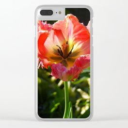 Almost faded red tulip ... Clear iPhone Case