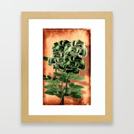 WILD IRISH ROSE - 051 Framed Art Print