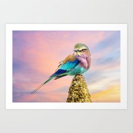 Lilac breasted roller at sunset Art Print