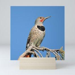 Northern Flicker Mini Art Print