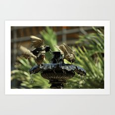 Rowdy Bird Bath Art Print