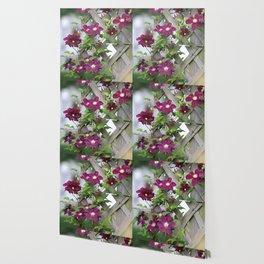 Lilac Clematis Climbing Trellis Wallpaper