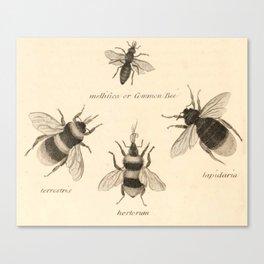 Naturalist Bees Canvas Print