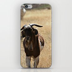Goat iPhone & iPod Skin