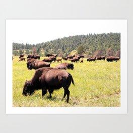 Wide Open Pastures Art Print