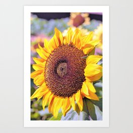 Sunflower Bee by Reay of Light Art Print