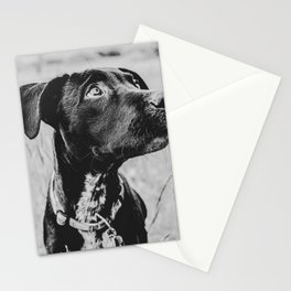 Wheatfield Dog Portrait // Sharing Memories with A Best Friend Such Amazing Eyes Stationery Cards