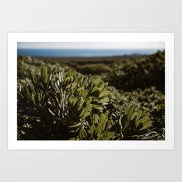 Jardin cactus - Lanzarote, Canary island - Fine art travel photography  Art Print