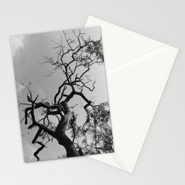 Old Spooky Bare Tree Branches Stationery Cards