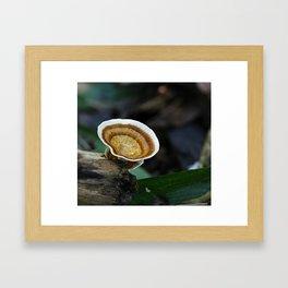 Fungi on tree stump Framed Art Print