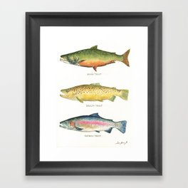 Trouts Framed Art Print