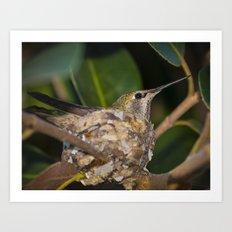 Hummingbird in nest Art Print