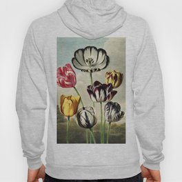 Tulips : Temple of Flora of New illustration of the sexual system of Carolus von Linnaeus Hoody