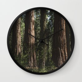 Sunlit California Redwood Forests Wall Clock