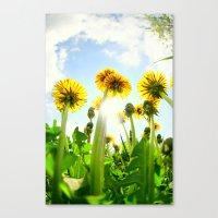 dandelion Canvas Prints featuring Dandelion by Falko Follert Art-FF77