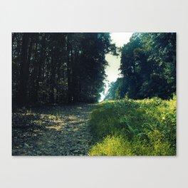 Orange Grove Canvas Print