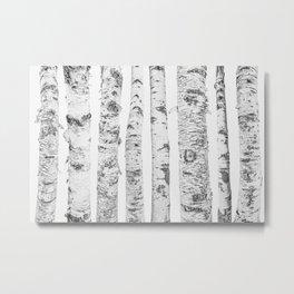 Birch Trees | Forest Landscape Photography Minimalism Metal Print
