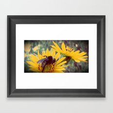 The Beez Knees Framed Art Print