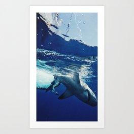 Shark Research Art Print