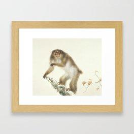 Kansetsu Hashimoto Old Monkey with Cherry in Autumn Framed Art Print